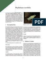 Phyllobates Terribilis