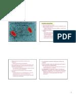 Tema 5 Transferencia de Informacion Genetica en Bacterias