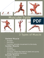 muscular system notes 16 17