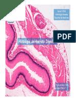 Histologia Digestivo