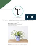Catalogo Tropicalia de Plantas - Tropicalia Estudio.pdf