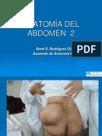 Anatomía Del Abdomen 2