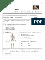Prueba Parcial Nº 3 Ciencias Naturales (Sistemas Del Cuerpo Humano)