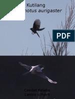 Burung.pptx