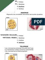 embriologia eliana part 2