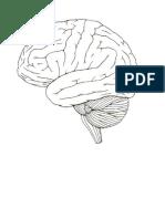 Imagenes cerebro