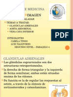 GLANDULAS-ADRENALES