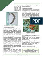 Erythrina crista-galli.pdf