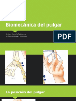 Biomecanica Del Pulgar