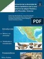 Caracterización de La Diversidad de Foraminíferos Bentónicos de La Zona Intermareal en Las Playas Paraíso y Punta Mocambo, Veracruz