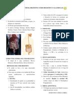 Contenido Nº 12 Sistema Digestivo (Tubo Digestivo y Glandulas) Patricia Correa.
