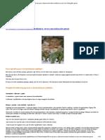 Ervas Para o Desenvolvimento Mediúnico; Ervas Com Indicações Gerais