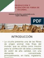Producción y Comercialización de Fibra de Vicuñas