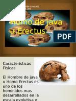 Homo de Java u Erectus Dulce Karen