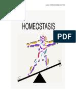 Ensayo Homeostasis