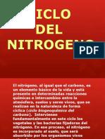 Ciclo Del Nitrogeno
