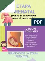 Etapa Prenatal (2)
