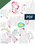 Mapa Mental Sociedades de La Informacion