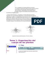 Sistema radicular.docx