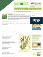 Artemisa o Hierba de San Juan_ Propiedades Medicinales y Su Cultivo _ ECOagricultor