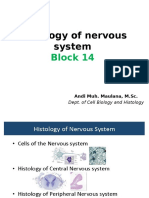 Microsructure of CNS&PNS