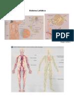 02-sistema_linfatico.pdf
