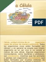 celula, tejidos