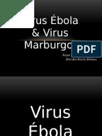 Virus Ébola y Marburgo Transmisibles.