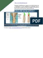 Il Nuovo Pentacipite. Scopri Il Tensore Del Vasto Intermedio - Ticinosthetics GainzSchool @2016 - Www.ticinostheticsgs.com