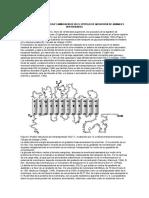Transporte de Glucosa en Vertebrados