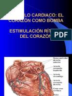 mc3basculo-cardiaco
