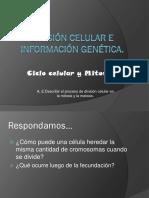 Ciclo Celular y Mitosis, 2do