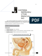 Anatomía 5to Secundaria 9