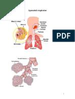 Imagini Anatomie AP Digestiv, Resp Si Cardovas.