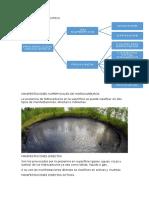 Prospeccion Geoquimica Organica en Superficie