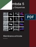 membrana.pdf