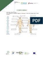 Corpo Humano e orgãos.doc