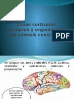 Zonas Corticales Terciarias y Organización de Síntesis Concretas