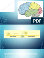 structure and function of the brain biopsyc day 3 2016