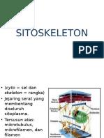 1.sitoskeleton (1).OK