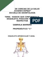Huesos Del Esqueleto