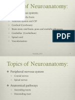 neuroanatomy 2015