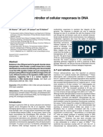 ATM, A Central Controller of Cellular Responses to DNA Damage