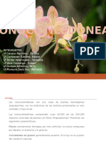 TRABAJO DE MONOCOTILEDONEAS 2016.pptx