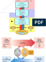 Bioenergética metabolismo.ppt