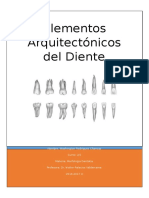 Elementos Arquitectónicos del diente