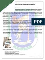 Roteiro de Estudo Anatomia – Sistema Esquelético.pdf
