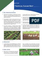How to Grow Tropical Sugar Beets_EN (1)