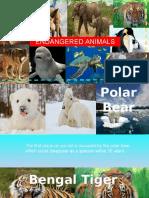 Endanger Animals