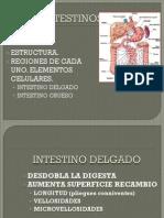 DIGESTIVO II